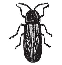 Male lampyris noctiluca vintage vector