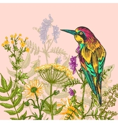 sketch of bird vector image vector image