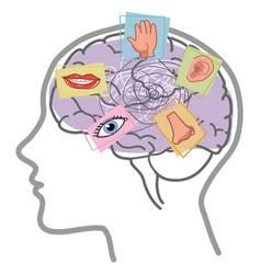Brain 5 senses disorder vector