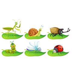 Different types of bugs on green leaves vector
