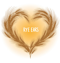 rye ears heart isolated vector image