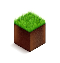 Grass cube isolated on white vector image vector image