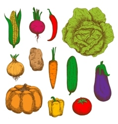 Organically grown vegetables colorful sketches vector