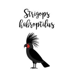 strigops habroptilus parrot bird vector image vector image