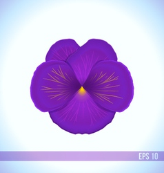 Head of violet viola flower vector