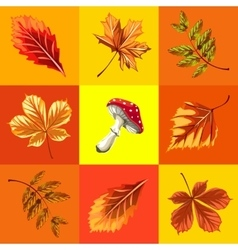 Autumn background set of leaves and mushroom vector