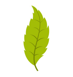 Narrow toothed green leaf icon isolated vector