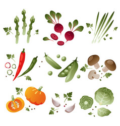 set of vegetables on white background vector image vector image
