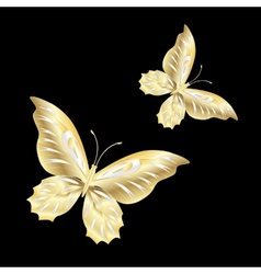Gold Lace butterfly on black background vector image