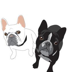 French bulldogs vector