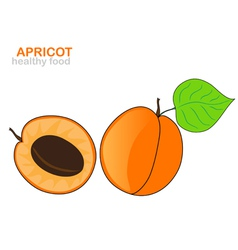 Apricot fruit vector