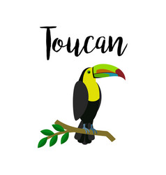 Exotic tropical toucan parrot bird vector