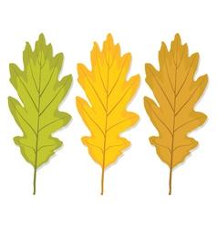 three autumn oak leaf vector image vector image
