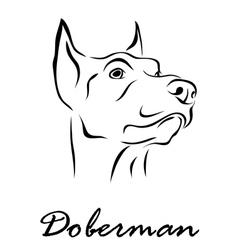 Doberman vector