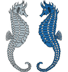 two seahorse vector image