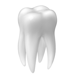 Molar tooth icon vector