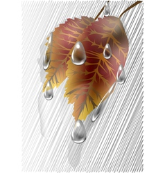 Autumn leaves under the rain vector