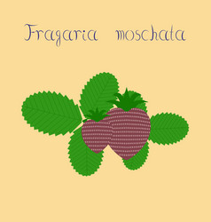 flat on background plant fragaria vector image