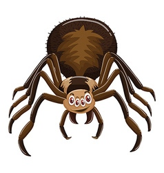 Wild spider on white background vector image