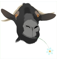 Cool goat with flower vector image vector image