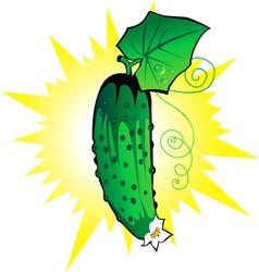 Cucumber fresh vector