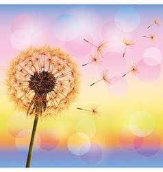 Dandelion on background of sunset vector image