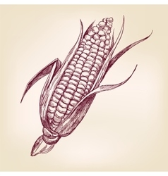 Corncob hand drawn llustration realistic vector