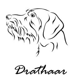Drathaar vector image vector image