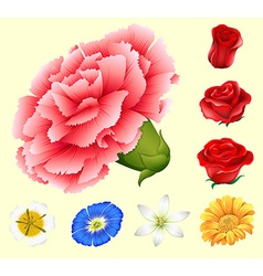 Various kind of flowers vector