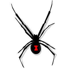 Black Widow Spider vector image vector image