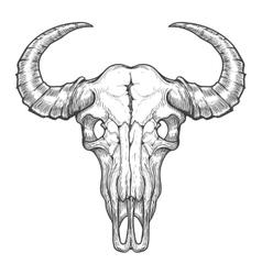 Buffalo skull sketch vector image vector image