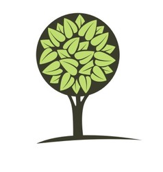 Green tree with leaves vector image vector image