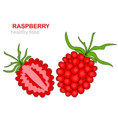 Raspberry fruit vector