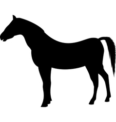 Horse black silhouette vector