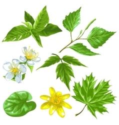 Spring green leaves and flowers set of plants vector