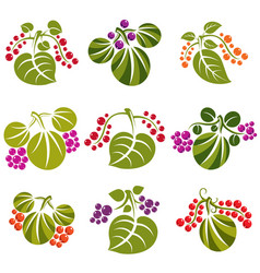 set of green spring leaves with tendrils and vector image