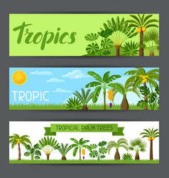 Banners with tropical palm trees exotic tropical vector