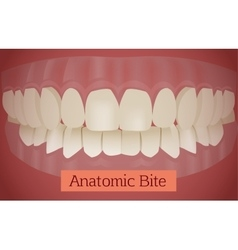 Teeth bite vector