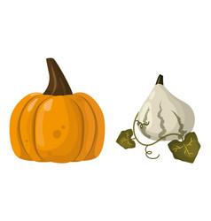 fresh orange pumpkin vegetable isolated vector image vector image