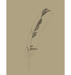 Retro Bird Feather Drawing in vector image vector image