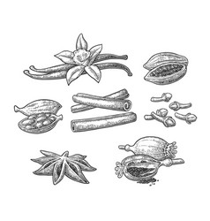 set of spices anise cinnamon cocoa vanilla vector image