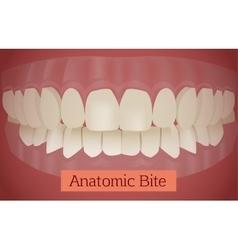 Teeth bite vector