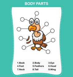 Vulture vocabulary part of body vector