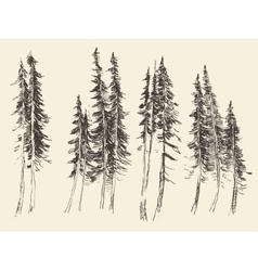 Fir forest engraving hand drawn sketch vector image