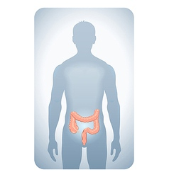 colon highlighted vector image