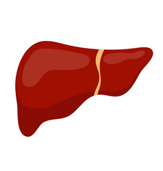 liver icon flat style internal organs of the vector image