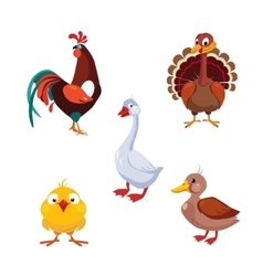 Poultry domestic birds set vector