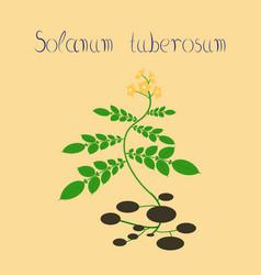 Flat on background plant solanum vector