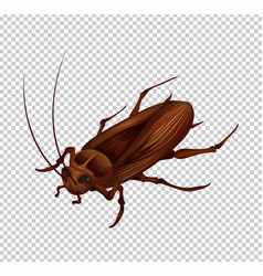 Cockroach on transparent background vector