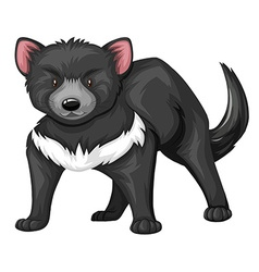 Tasmanian devil with black fur vector